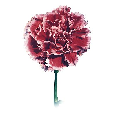 cveti-3_3