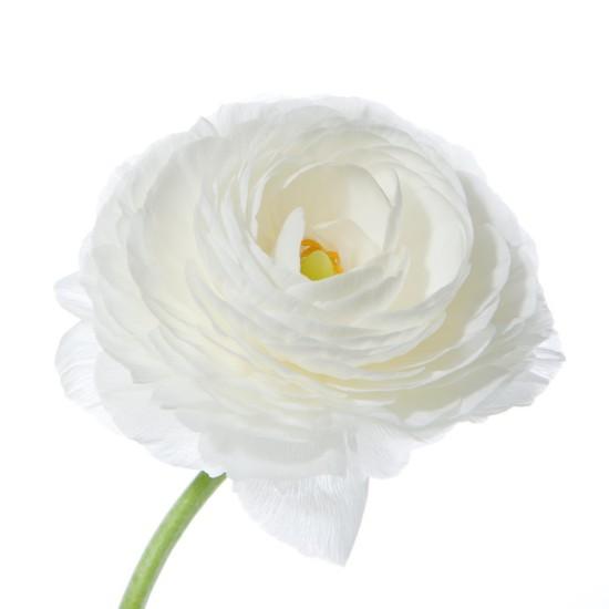 white-ranunculus